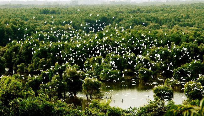 Với diện tích hơn 7.000 ha, 231 loài chim, 130 loài cá và hệ sinh thái đa dạng, VQG Tràm Chim là khu Ramsar có vai trò quan trọng trong bản đồ đa dạng sinh học thế giới